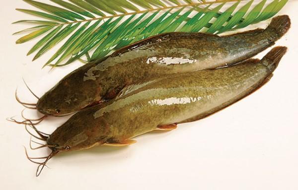canh cá trê nấu măng